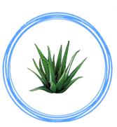 Aloe Vera. Colchon que contiene aloe vera colchón natural con caracteristicas altamente beneficiosas para la salud